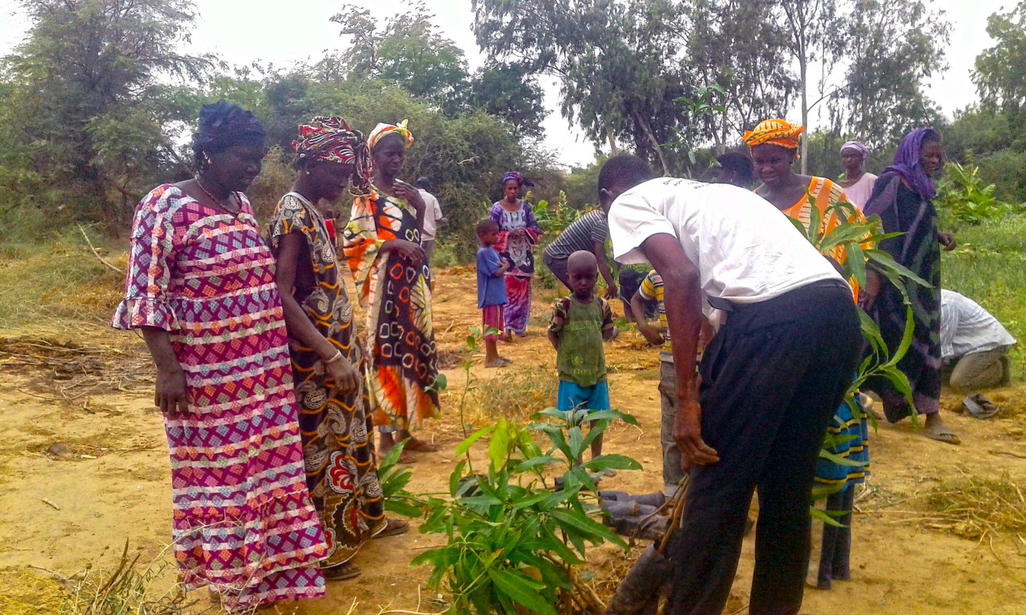 REDES : Réseau pour l'Emergence et le Développement des Ecovillages au Sahel